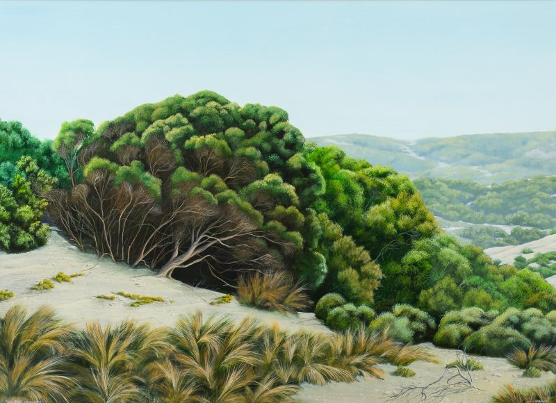 #64 Seal Bay Landscape - James Ainslie  |  Acrylic on Card  |  101x124x5  |  1993